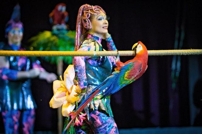 Цирк фантазий в крокусе
